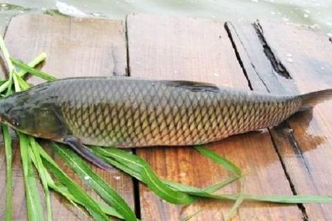 Cá Trắm Giòn