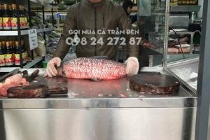 Khúc cá trắm đen tươi sống 1kg - 2kg